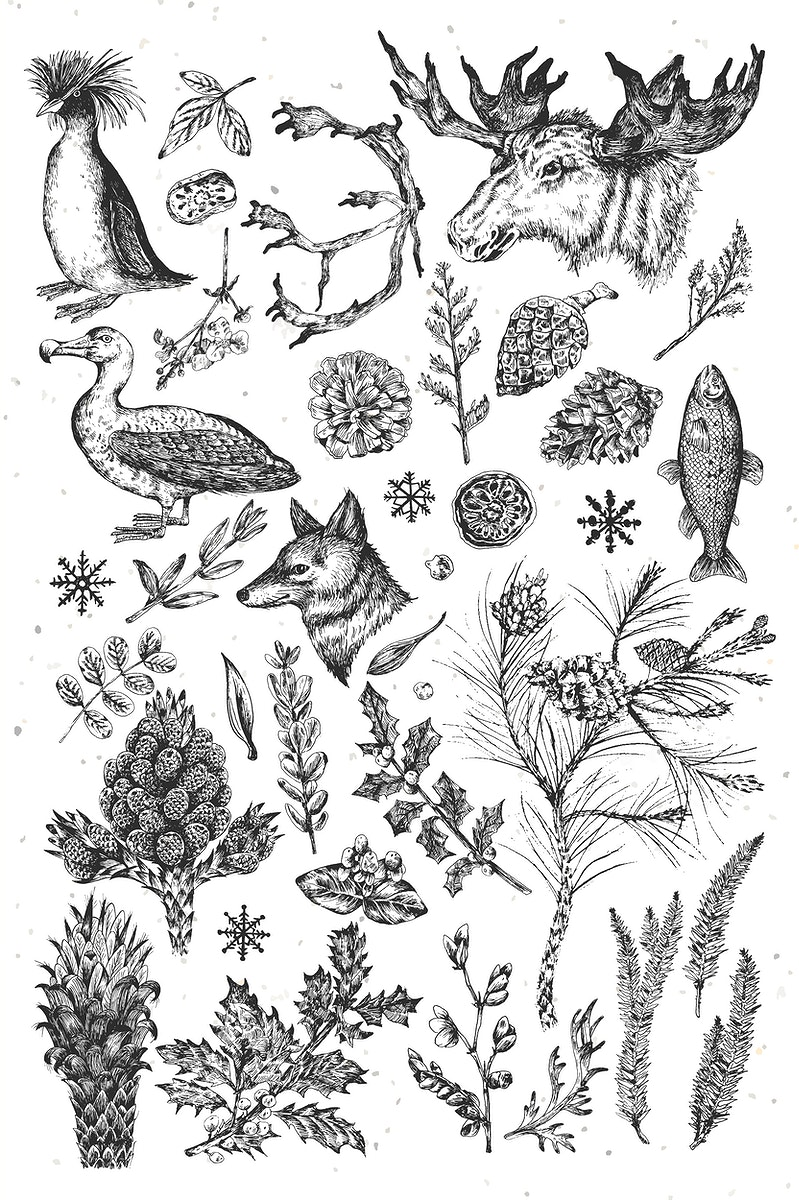 Animal drawing collection in grayscale vector
