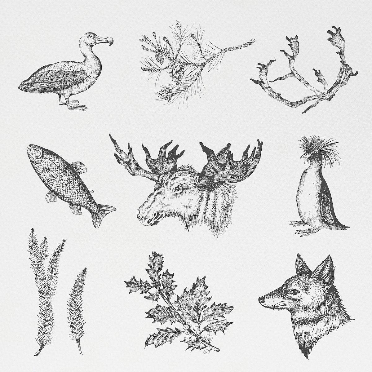 Animal drawing social ads template illustration
