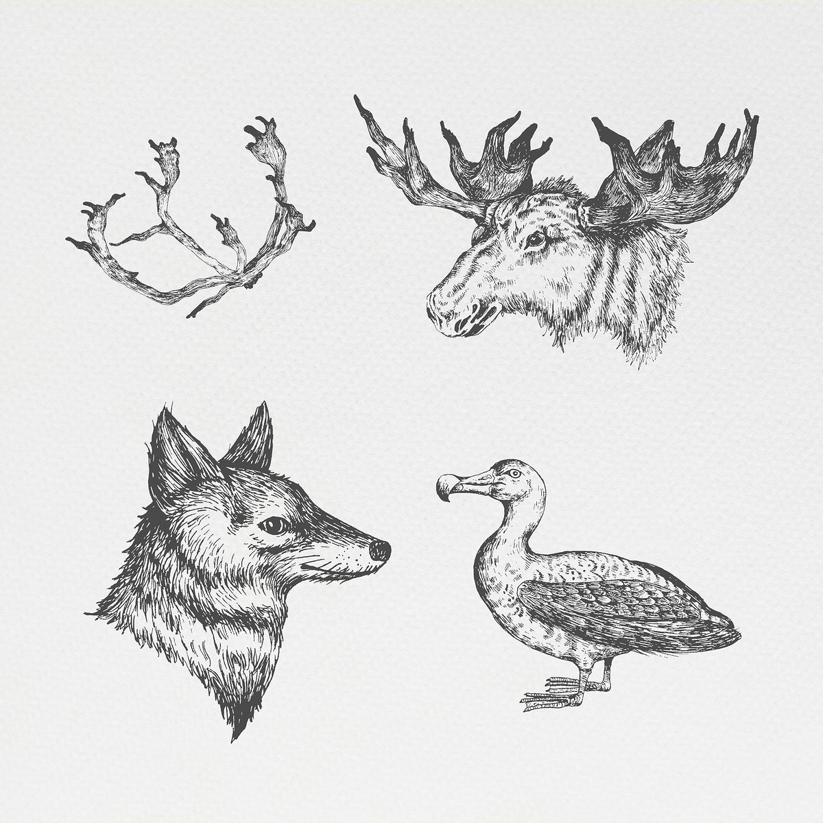 Animal drawing social ads template collection illustration