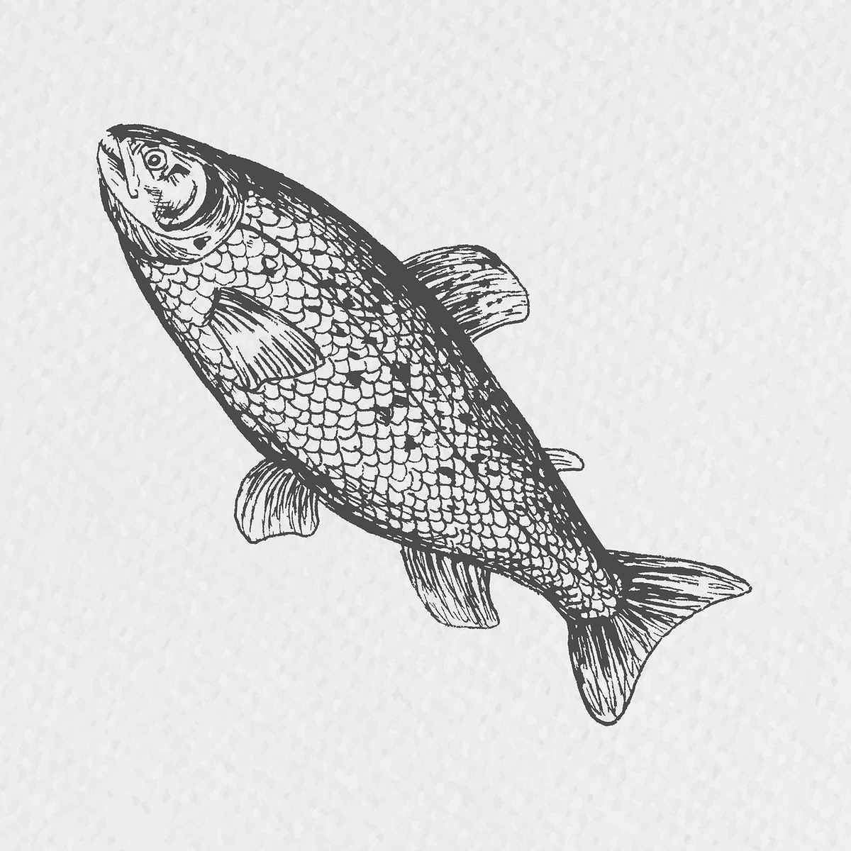 Vintage furry fish sketch social ads template vector