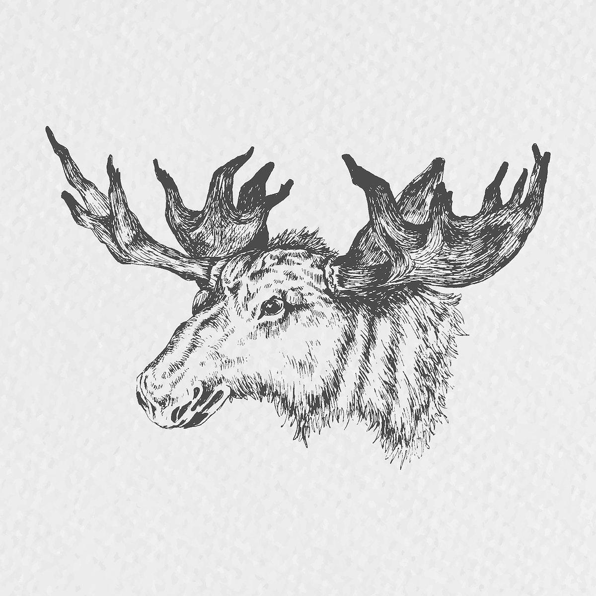 Hand drawn moose head vector