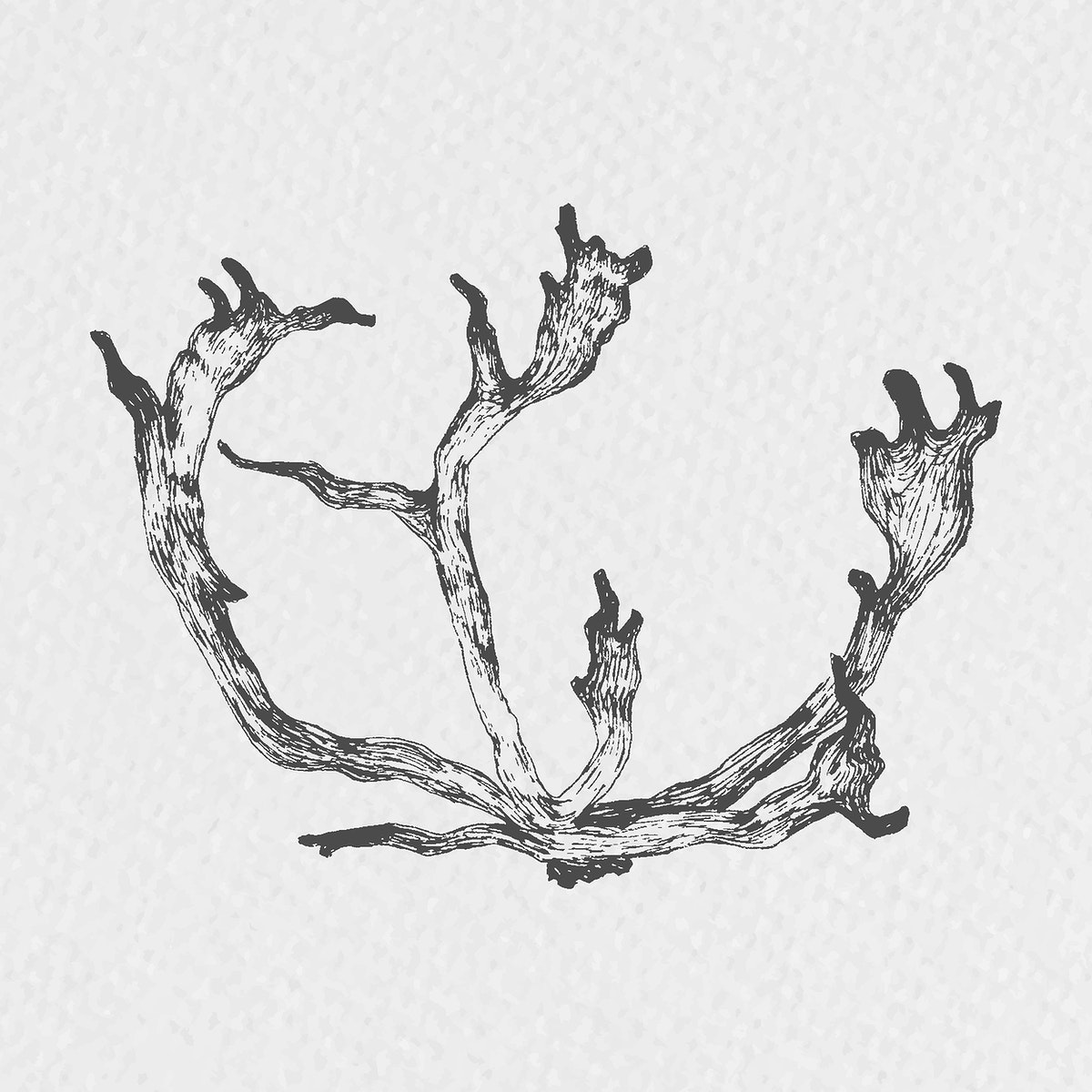 Hand drawn reindeer antler vector