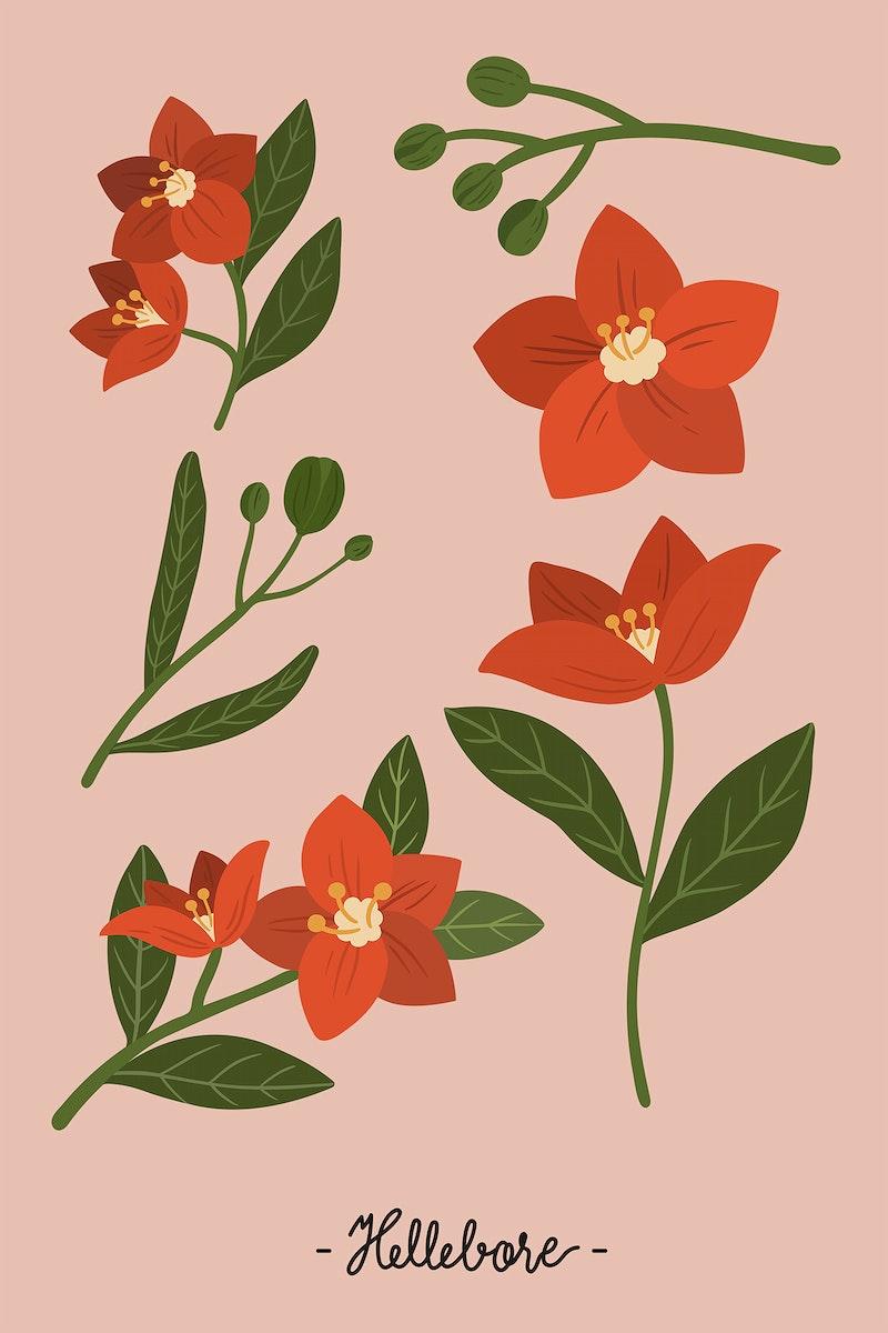 Red botanical on a pink background illustration