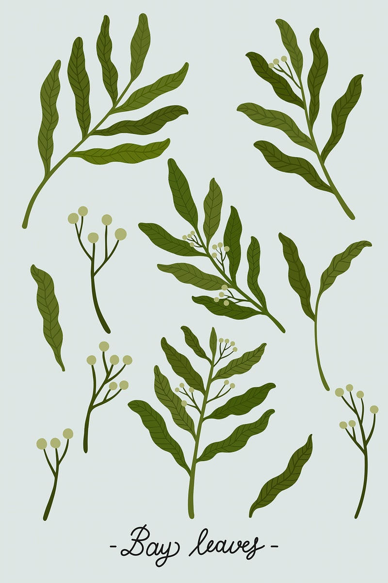 Green leaves on a gray background illustration