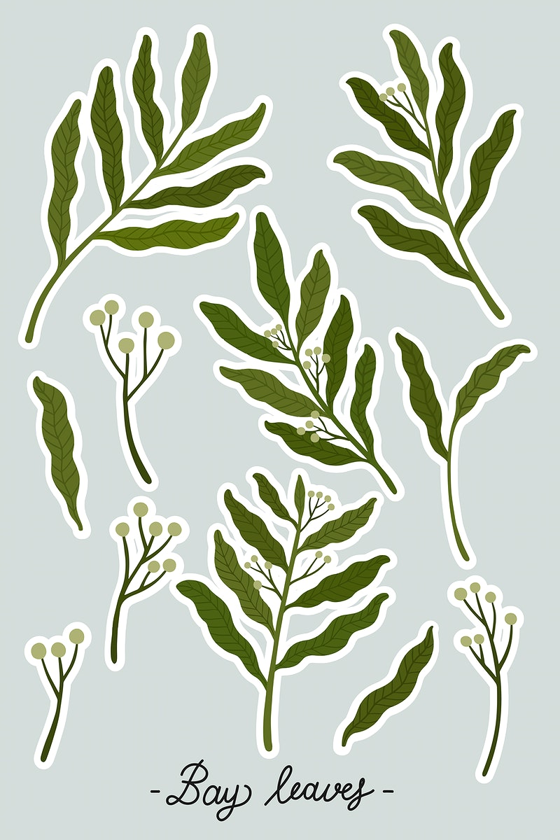 Bay leaves and seeds set vector