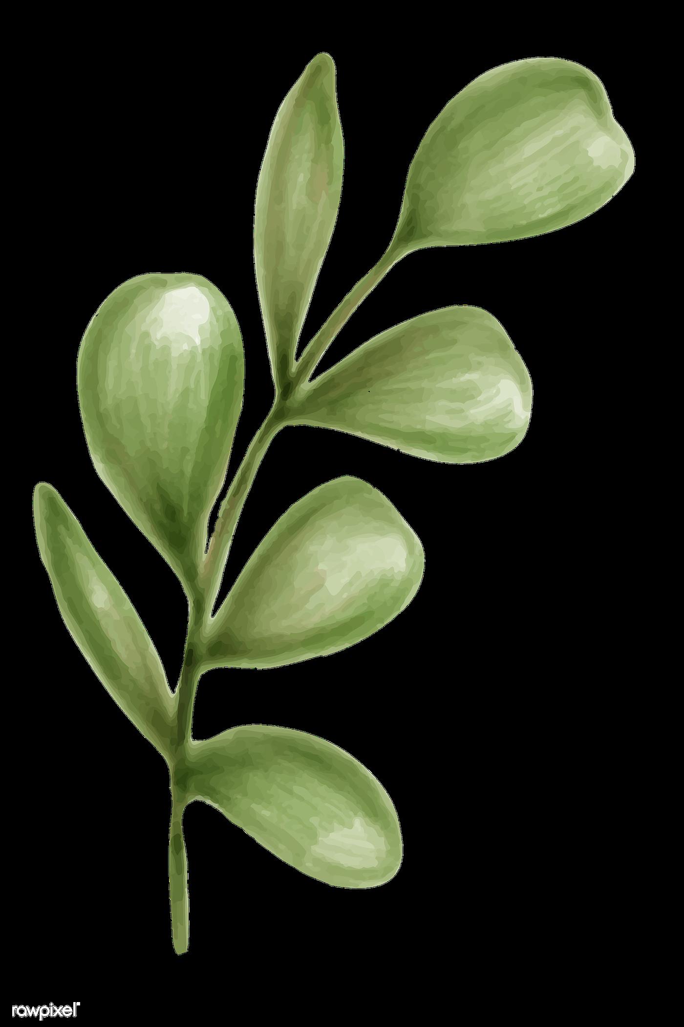 Green leaf png | Royalty free transparent png - 2032942