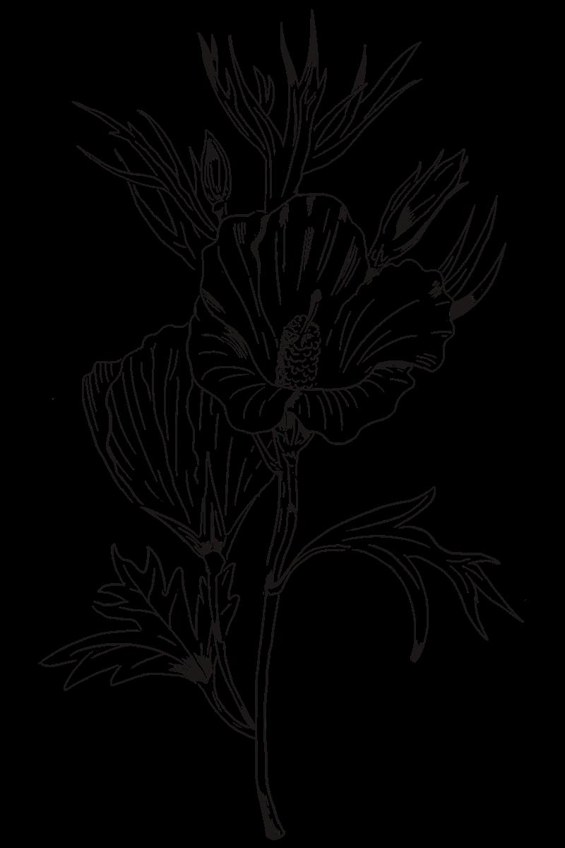 Flower 2 Flower Drawing